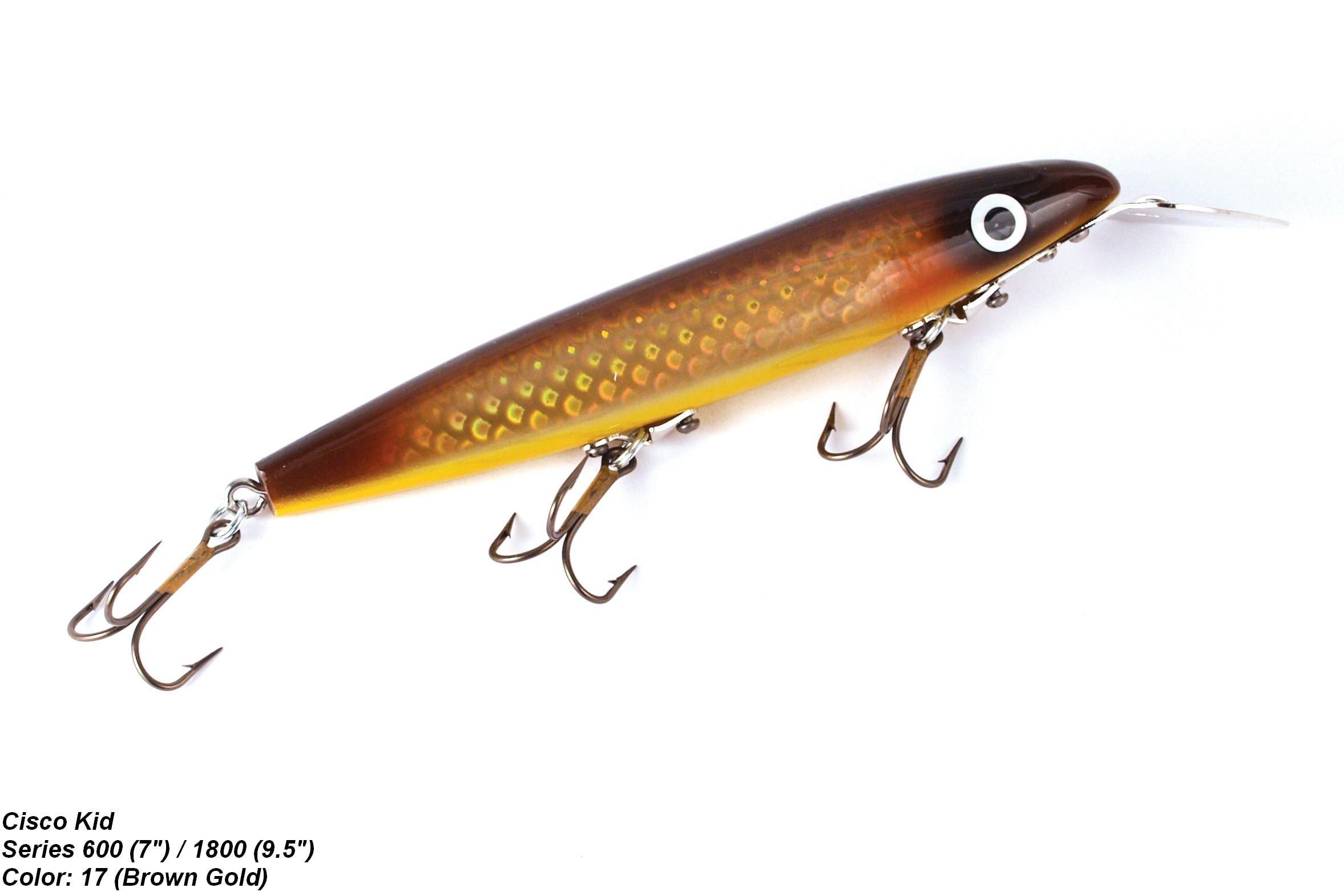 Husky 600 Series Cisco Kid [Brown/Gold]